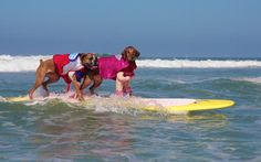 Two dogs in costumes surfing as one. | 54 Reasons You Should Go To A Dog Surfing Competition Before You Die