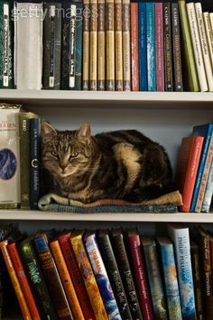 """Kitty-Cat: """"Books for everyone, young and old; books are worth their weight in… Animal Gato, Mundo Animal, Crazy Cat Lady, Crazy Cats, Gatos Cats, All About Cats, Tier Fotos, Beautiful Cats, Cool Cats"""