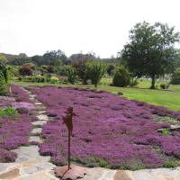 Apparently Thyme is a great aternative to lawn. It needs no mowing , no feeding and it resists drought.