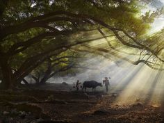 Pastoral Lighting by Thierry Bornier on 500px