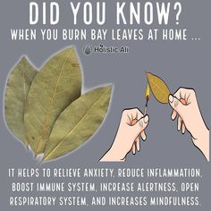 Do you burn bay leaves❓❓❓ Health Hacks! ➡️ IG 👉🏽 Do you burn bay leaves❓❓❓ Health Hacks! Burning Bay Leaves at home is healthy 😁 I love burning bay leaves. Bay leaves have anti-anxiety properties. Natural Health Remedies, Natural Cures, Natural Healing, Natural Life, Herbal Remedies, Holistic Healing, Natural Treatments, Health And Beauty, Health And Wellness