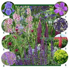 Long Blooming Perennials, Hardy Perennials, Hardy Plants, Flowers Perennials, Planting Flowers, Perennial Border Plants, Plants That Attract Butterflies, Full Sun Plants, Planting Plan