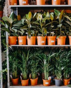 rows of plants for sale at Bergamotte pop up Plants For Sale, Plant Sale, Pop Up, Visit Bristol, Paradise Plant, Travel Design, Window Sill, Exterior Design, House Plants