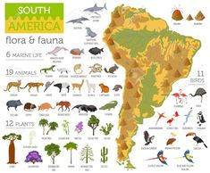 Illustration of South America flora and fauna map, flat elements. Animals, birds and sea life big set. Build your geography infographics collection. Vector illustration vector art, clipart and stock vectors. Anaconda, South America Animals, Jaguar, Flying Lemur, Quiet Book Templates, Elephant Seal, Maps For Kids, South America Travel, South America Continent