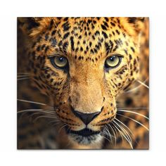 Find Leopard Portrait stock images and royalty free photos in HD. Explore millions of stock photos, images, illustrations, and vectors in the Shutterstock creative collection. Big Cats, Cats And Kittens, Cute Cats, Zoo Animals, Animals And Pets, Cute Animals, Wild Animals, Exotic Animals, Animals Images