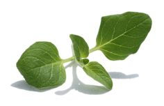 The Iron You: Spice Up Your Life #6: The Value Of Oregano