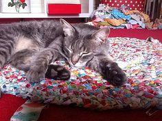 catsized2 | by ric rac