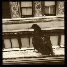 pigeon :-)