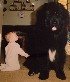 Toddler & enormous dog ... is this for real??