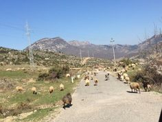 Albania - from post 6 Days and 6 Countries with 10 Kids: A Round-Up Of Our Travels This Week | Larger Family Life