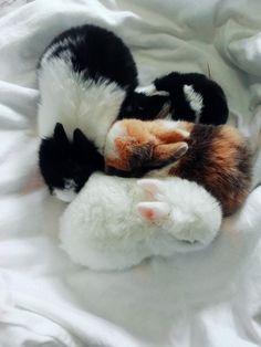 Rabbit Toys, Pet Rabbit, Baby Bunnies, Cute Bunny, Cute Baby Animals, Animals And Pets, Indoor Rabbit, Fluffy Bunny, Guinea Pigs