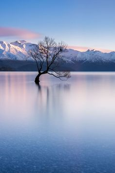 That Wanaka Tree, Wanaka, New Zealand - Probably the worlds most photographed tree! New Zealand Travel Destinations Honeymoon Backpack Backpacking Vacation Wanderlust Budget Off the Beaten Path Visit New Zealand, New Zealand Travel, New Zealand Lakes, New Zealand Art, Cheap Winter Vacations, Places To Travel, Places To See, Travel Destinations, Holiday Destinations