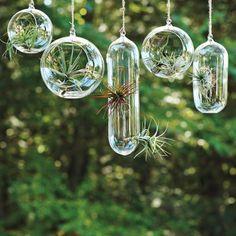 Pots de fleurs en verre