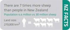 А знали ли вы, что в Новой Зеландии количество овец превышает количество людей в семь раз?? Education In Australia, New Zealand, Dreaming Of You, Study, Facts, Studio, Studying, Research