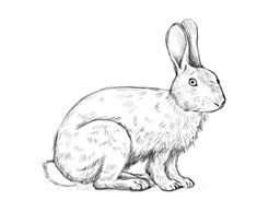 line drawings of rabbits   How to draw a rabbit - Complete the drawing
