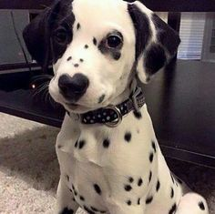 Sooo sweet !! Look at the heart shape nose