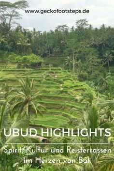 Ooh, Ubud. Wer hätte gedacht, dass ich meinen Lieblingsort auf Bali im Zentrum der Insel finde? Hier findest Du meine Ubud Highlights. #bali #ubud #indonesien #asien #reiseblogger Maldives Travel, Bali Travel, Ubud, Beautiful Places To Travel, Cool Places To Visit, Koh Lanta Thailand, Komodo National Park, Bali Honeymoon, Gili Island