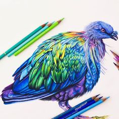 Nicobar Pigeon by Sallyann Pencil Drawings Of Animals, Bird Drawings, Love Drawings, Drawing Animals, Colored Pencil Artwork, Color Pencil Art, Colored Pencils, Funny Sketches, Coloring Book Art