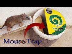 Smart Mouse Trap In New Style - How To Make Easy Mouse Trap Thank you so much for watching. Homemade Mouse Traps, Rat Traps, Pest Control, Mice, Make It Simple, Animal, Youtube, Easy, Style