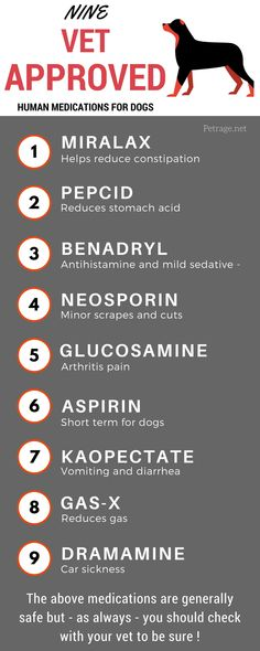 9 Human Medications That are Generally Safe for Dogs These nine medications are generally safe for use by dogs as reported by some of the leading veterinary websites. This infographic lists the medications and suggested dosages – good reference ! Meds For Dogs, Medication For Dogs, Dog Safe Medications, Benadryl For Dogs Dosage, Planet Fitness, Dog Care Tips, Pet Care, Pet Tips, Poodles