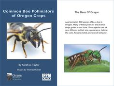Common bee pollinators of Oregon crops, by the Oregon State Department of Agriculture, Insect Pest Prevention and Management