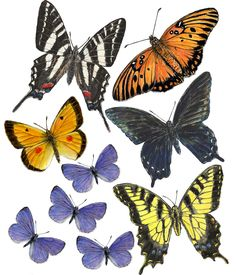 Cryptic Habits: The Hidden Lives of Midsouth Entomologists Interview with Joe MacGown, Illustrator, Mississippi Entomological Museum Butterfly Images, Insect Art, Painting Gallery, Bird Cages, Beautiful Butterflies, Art Tips, Art Studios, Vintage Prints, Insects