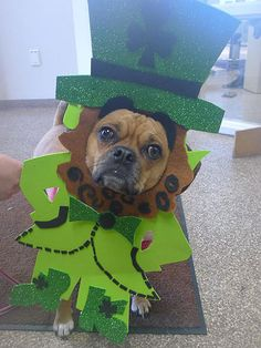 st. paddys day pooch!