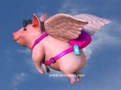 preaparado para el viake - Chanchito volador -