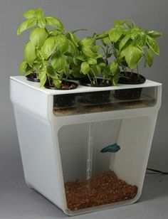 self-cleaning fish tank/herb garden by Back To The Roots