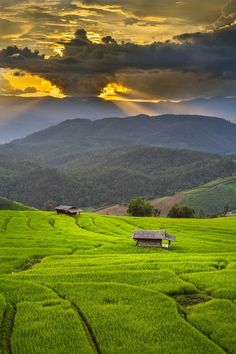 Sunset over Rice Fields in Chiang Mai, Northern Thailand