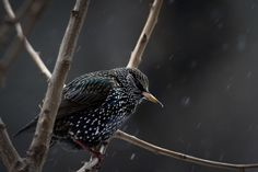 A bird sits in a tree in Central Park as it snows in the Manhattan borough of New York January 26, 2015. (Photo by Carlo Allegri/Reuters)