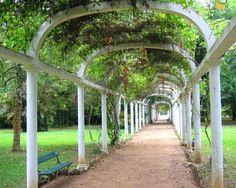 Jardim Botânico_RJ