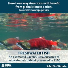Freshwater fishing plays a significant role in many local economies across our nation. Climate change can reduce the habitats of coldwater fish, due to increases in stream temperature and changes to stream water flow. When we #ActOnClimate we can preserve 230,000-260,000 acres of coldwater fish habitat in 2100.