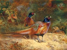 Cock and Hen Pheasants in the Woodlands Premium Giclee Print by Archibald Thorburn at Art.com
