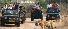 Enjoy the adventurous trip with #Bhatitours providing  #RajasthanSafariTours , #RajasthanWildlifeTourPackages and also avail the facilities of #cabhireinJaipur and much more at best price with latest offers.