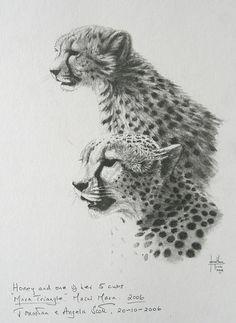 Jonathan Truss Wildlife Sketches - Pencil Sketch