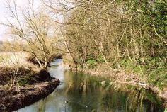 Take the sweet walk along the river south of Grantchester to Byron's pool. Photo: Andrew Roberts, March 2008.