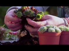 Sukkulenten im rostigen Pokal - YouTube