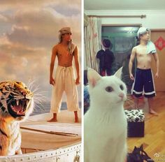"""""""Nailed it"""" meme joke pic: Life of Pi imitation. For more great humor and funny pics visit www. Funny Cats, Funny Animals, Cute Animals, Crazy Cat Lady, Crazy Cats, Life Of Pi, Funny Memes, Hilarious, Funny Comedy"""