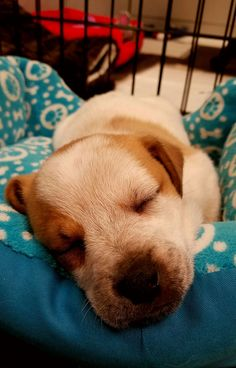 Sleeping puppy cause we all need some cheering up. http://ift.tt/2jToIn7