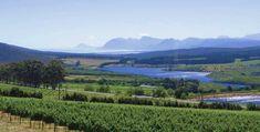 Best of Hemel-en-Aarde Cool Climate Wine Valley Pinot Noir, Heaven On Earth, Red Wine, Vineyard, Burgundy, Travel, Outdoor, Outdoors, Viajes