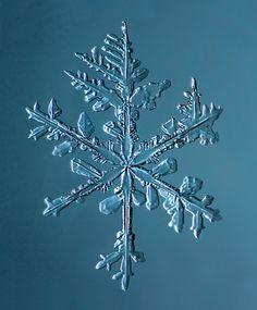 Snowvember, Stellar Dendrite Snowflake print