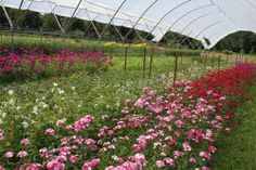 The resources listed on cut flower production are some of the most useful I've found