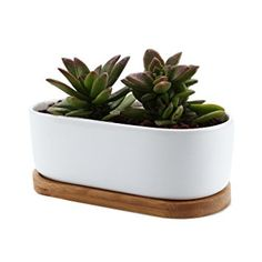 T4U 17CM Pot de Fleur en Céramique de Conception Ovale Série et Plateau de Bambou/Pots de Cactus/Plante en Pot
