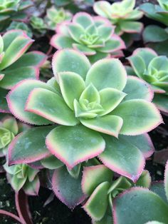 Find all your gardening needs at Minter Country Garden Store in Chilliwack, BC Succulents, Mint, Gardening, This Or That Questions, Country, Plants, Rural Area, Garten, Succulent Plants