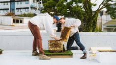 "Beekeepers plagued by ""prolific, highly predatory"" German wasps amid population boom. Wasp, Bee Keeping, Numbers, Wildlife, German, Honey, Europe, Sky, Country"