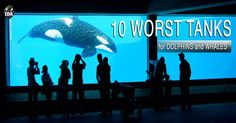 """""""Ten Worst Tanks"""" for Dolphins & Whalesf -- In Defense of Animals- In Defense of Animals"""