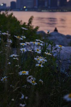 Flowers by the river.