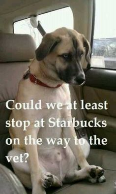 Dog wants to go to Starbucks @Lynda Brown Suglia