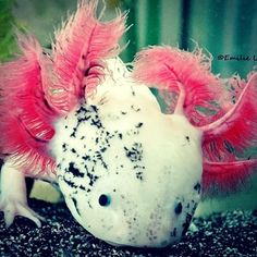 <3 (@emi_lie_axolotl) | Instagram photos and videos